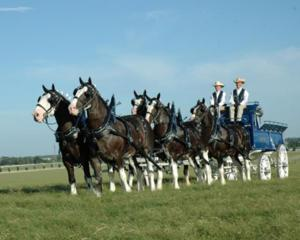 Clydesdale-Wagon-in-field